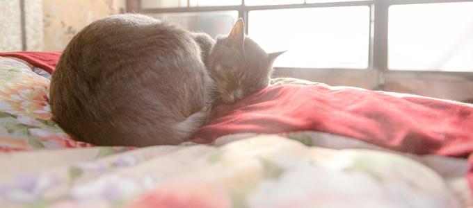 羽毛布団の上で眠る猫